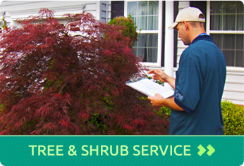 Tree & Shrub Service
