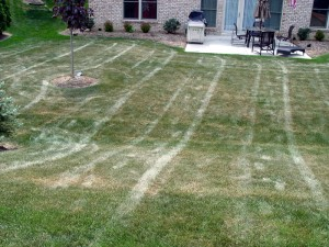 Tip: do not mow the lawn on a hot dry afternoon. If the lawn is in stress, it is better to just leave it alone unless you plan to water.