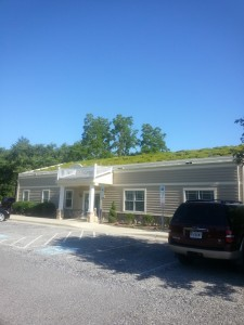 Picture of green roof 6/29/2015